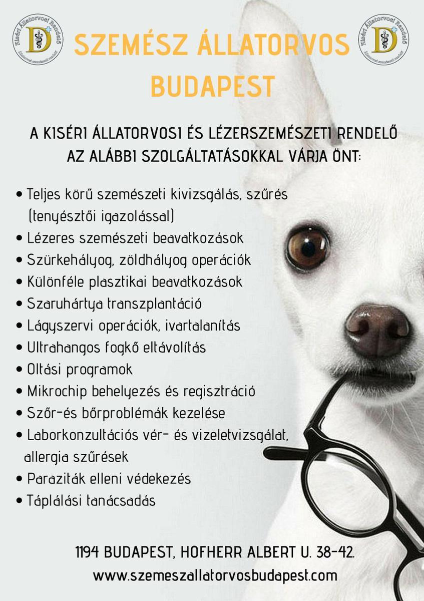 magyar-angol fordítás erre a szóra: szemészeti