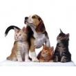 Állati.com Állati Ínyencségek Boltja