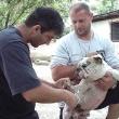Chiru-Vet Állatorvosi Rendelőintézet