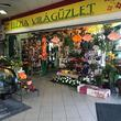Frézia Virág-Ajándék - Cédrus Piac