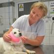 Dr. Jancsik Mária állatorvos