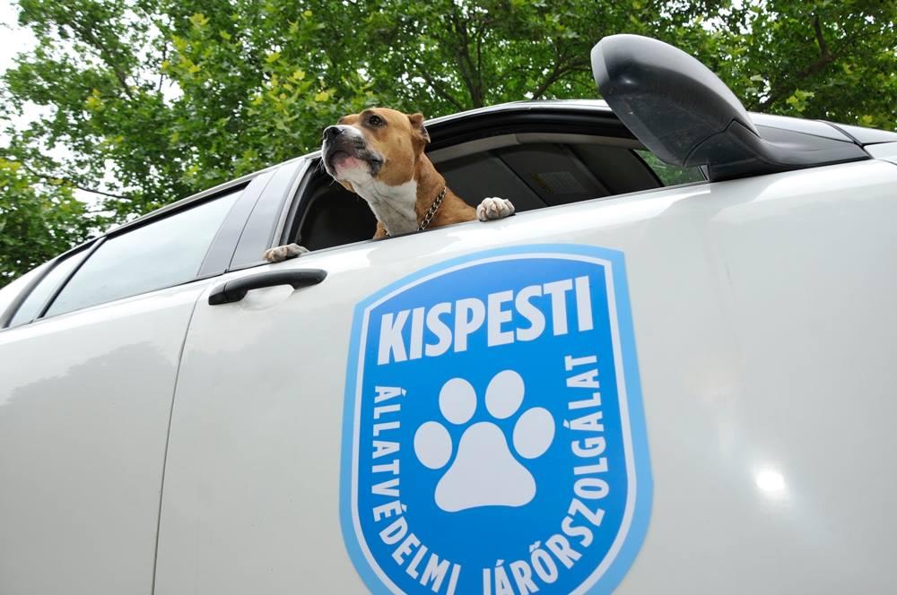 Önkénteseket vár a Kispesti Állatvédelmi Járőrszolgálat