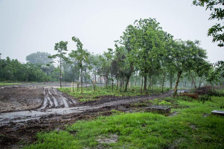 Tart a kiserdő megújítása (forrás: uj.kispest.hu)