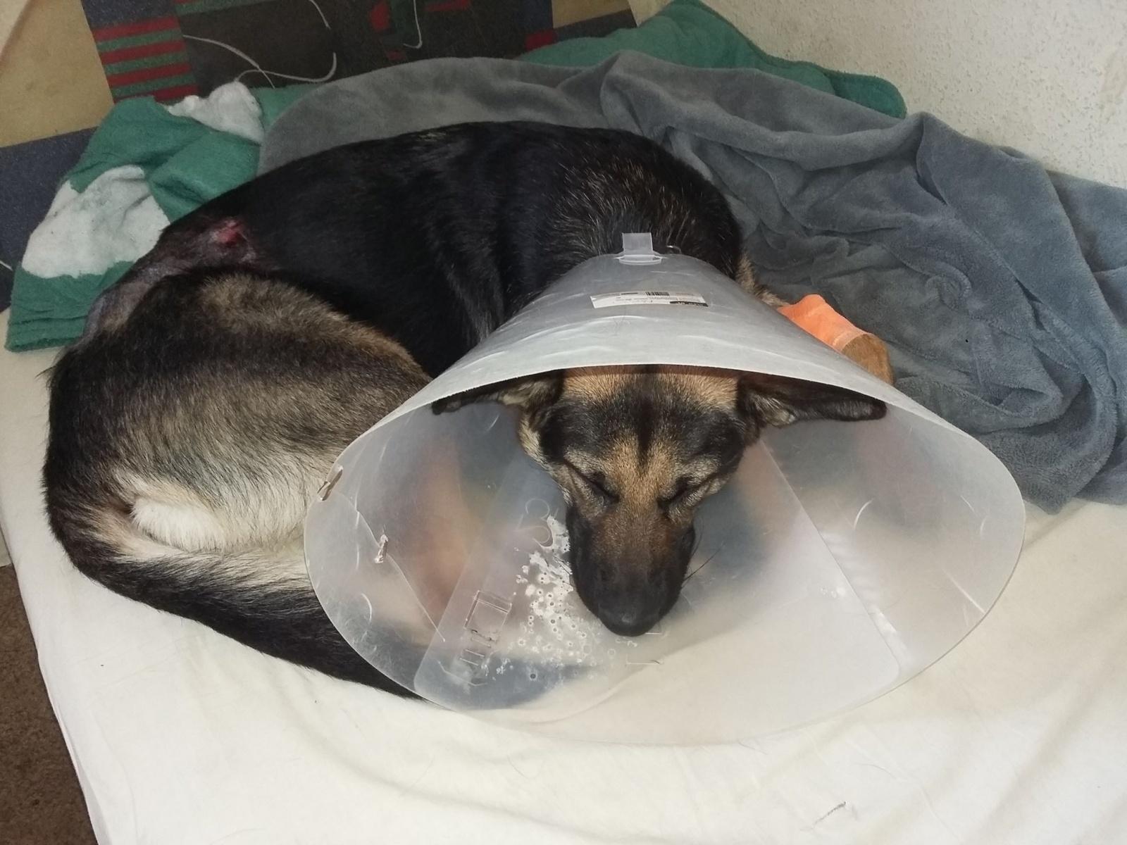 A sérült kutyus
